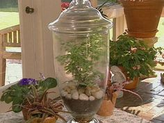 plant in glass home decorate | Plants and Flowers Under Glass : Archive : Home & Garden Television