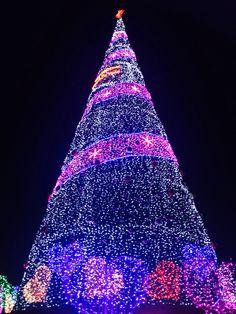 2013 Seoul city _ christmas Tree