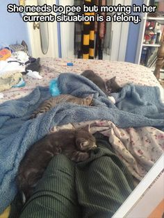 """I always try to replace my legs with my arms and then slowly lower the kitties to the bed or couch, but then they give me that LOOK and stalk off, like """"fine, we can tell when we aren't welcome.""""  And then I feel like they'll never come sit on my lap again."""
