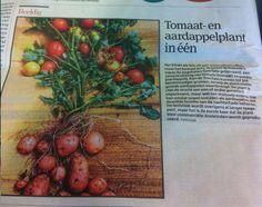 Spotted in Gazet van Antwerpen