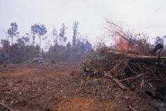 #10 Article Overview of Climate Change in Indonesia