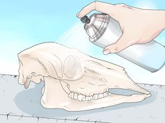How to Preserve a Skull. A cleaned animal skull can make a beautiful and unique ornament for a wide range of art products.