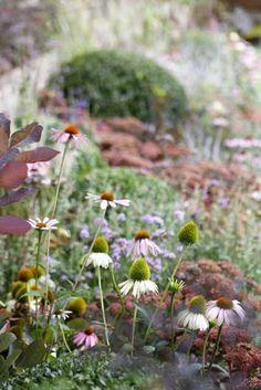 Photos from landscape design and garden design projects by Ian Barker Gardens. Garden Design Images, Landscape Design, Hampton Garden, Beautiful Gardens, Gardening Tips, The Hamptons, Design Projects, Gallery, Flowers