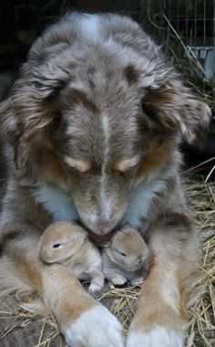 Dogs with other cute animals photo collection - Unlikely animal friends