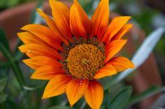 Otoño Abriliano arte art fotografía photography photographer photoshooting nikon reflex flowers garden jardin flores