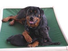 7 Best Rottweiler Images On Pinterest Rottweiler Dog Dog Beds And