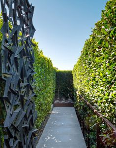 ficus hedges; gate by Christopher Puzio