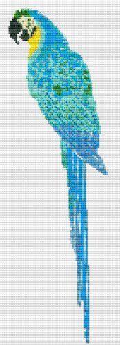 Blue and Gold Macaw Cross Stitch Pattern 0051