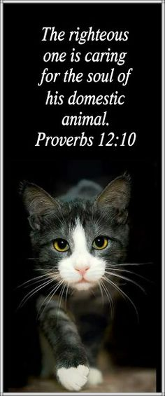 The righteous one takes care of his domestic animals. Proverbs 12:10