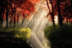 autumn / fall  LIGHT!