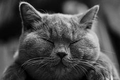 (about cat) - Articles on cat breeds, cat care, cat welfare, cat behavior, cat health and veterinary medicine. Cute Kittens, Chat British Shorthair, American Shorthair, Exotic Shorthair, Cool Cat Trees, Cat Merchandise, Owning A Cat, Unique Cats, Sleepy Cat