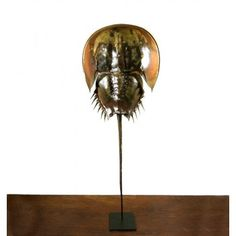 Interior & taxidermy. Horseshoe crab on pedestal / Degenkrab groot op standaard