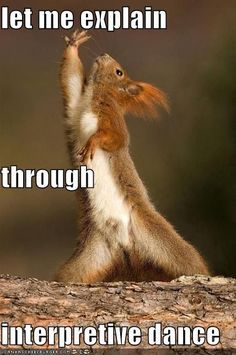 The Interpretive Dance Squirrel . The Interpretive Dance Squirrel Are we still doing more of what makes us happy? Funny Animal Memes, Funny Animal Pictures, Funny Animals, Cute Animals, Funny Memes, Memes Humor, Baby Animals, Funniest Memes, Animal Quotes