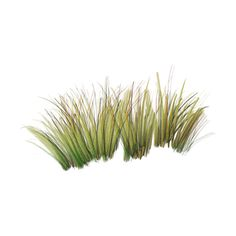 beach grass.png ❤ liked on Polyvore featuring grass, plants, backgrounds, flowers, green and scenery