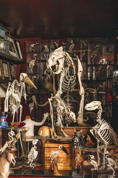 Viktor Wynd Museum of Curiosities, Fine Art & Natural History - Selection of skeletons (photograph by Oskar Proctor)