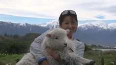 A True experience of New Zealand sheep shearing at 'The point sheep Shearing Show. in Kaikoura, meet the dogs and sheep on this third generation working farm Tahiti Vacations, Sheep Shearing, Kiwi, New Zealand, Opportunity, Action, Tours, Animals, Group Action
