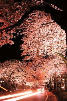 Cherry blossoms snapped at night on long exposure. #japan