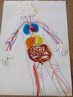 This project helps children understand how healthy lungs f Science Projects For Kids, Science For Kids, Crafts For Kids, Body Preschool, Preschool Crafts, Body Parts For Kids, All About Me Preschool, The Body Book, Christmas Crafts For Adults