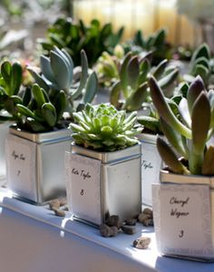 A California, Rustic-Ranch Wedding // Photo: Applemoon Photography Succulent Wedding Favors, Unique Wedding Favors, Trendy Wedding, Unique Weddings, Craft Wedding, Diy Wedding, Rustic Wedding, Wedding Photos, Wedding Ideas