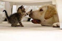 Adorable! Kitten | Cutearoo | Puppies  Free Books http://www.globalgrafxpress.com/goldmembersclub