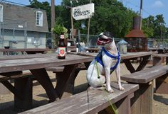 THE BEST PLACES TO DRINK WITH YOUR DOG IN DALLAS Dogs shouldn't have to miss out on the party... Lee Harvey's Mutts Relish @ Klyde Warren Hopdoddy Bread Winners