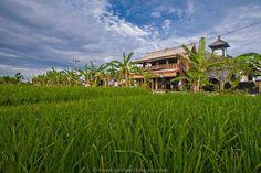 Top 6 Restaurants in Canggu Bali