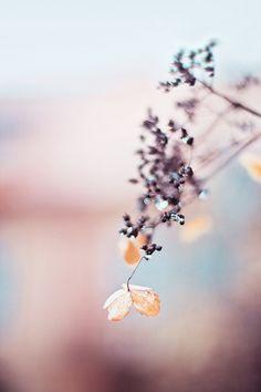 Pastel Fragility | 相片擁有者 JoyHey