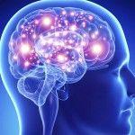 Tratarán de resucitar cerebros clínicamente muertos?