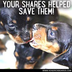Remember Mama Lulu? The poor abused mommy who was septic and full of maggots? You won't believe what your shares and purchases have done! Her babies are safe and so is she!  HendrickBoards