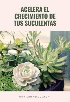 Plantas Bonsai, Types Of Succulents Plants, Planting Succulents, Garden Landscaping, Flora, Herbs, Landscape, Gardening, Interior
