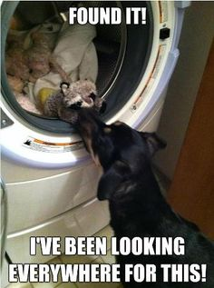 Is Save To Wash Dog Toys With Family Washer
