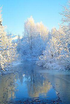 Pristine Winter Forest