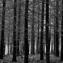 Valokuvatapetti - Blue Forest - b/w
