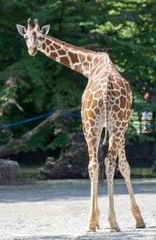 Tierpark Hellabrunn: Munich Zoo