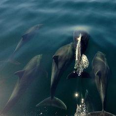 Dolphins by Brad Ennis on 500px - Bahía Concepción, Baja California Sur, México