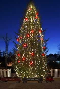 A 35 ft. tall Fraser Fir, grown near Boone, N.C., is featured in the Four Seasons Garden during Holidays at the Garden 2013, at Daniel Stowe Botanical Garden