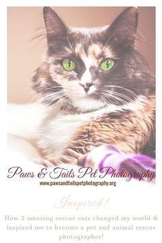 Inspired! My Story // Paws & Tails Pet Photography  I have always had a love of photography, of freeze framing those special moments you want to remember forever.  #petphotography #inspired #animalrescue #cats