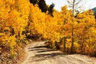 Fall foliage in Aspen, Colorado