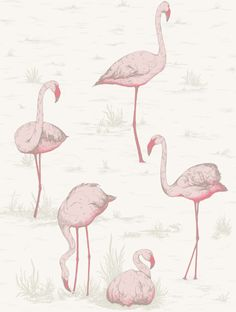 Cole & Son's Flamingoes from Contemporary Restyled collection. Perfect for young and old! A perennial best seller at The Orange Tree ;-)