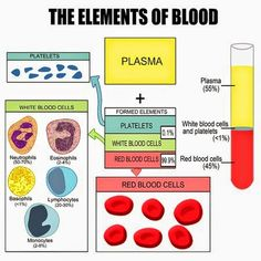 Your blood generally consists of 2 major parts, plasma and cellular elements. The plasma is the liquid part of your blood and allows it to flow easily. The other part consists of blood cells (red blood cells, white blood cells) and platelets. Blood Components, Nursing School Notes, Ob Nursing, Funny Nursing, Nursing Schools, Medical Laboratory Science, Pharmacology Nursing, Medical Anatomy, Human Anatomy And Physiology