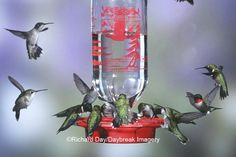 LOVE! Wish I could get this many hummingbirds at once in my yard, it will happen. Beautiful Ruby-Throated Humingbirds.