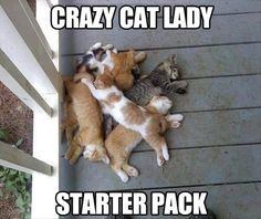 funny cat lady