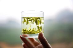 """""""Tea is drunk to forget the din of the world. Tea Quotes, Flower Tea, Chinese Tea, Forget"""