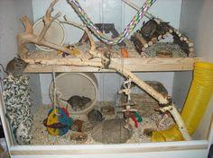 Degu cage Degu Cage, Hamster Stuff, Four Legged, Fur Babies, Globe, Creatures, Pets, Friends, Happy