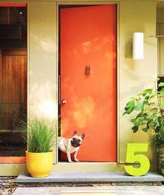 happy orange pup.