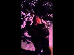 Door County Sled Dogs - Bonnie and George Do the Snow Dance
