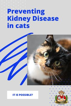 Cat parents, did you know kidney disease affects 1 in 3 cats over the age of 10? Check out our artcile where we dive deep on how you can support your cats health, special tips, tricks and food you can give your kitty to keep their kidneys healthy. Cool Cat Toys, Cool Cats, Pretty Cats, Beautiful Cats, Baby Cats, Cats And Kittens, All Types Of Cats, Cat Diet, Silly Cats