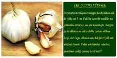 Jak uchovat česnek Garlic, Vegetables, Recipes, Food Recipes, Vegetable Recipes, Rezepte, Recipe, Cooking Recipes