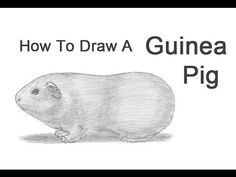 How to Draw a Guinea Pig: 6 Steps (with Pictures) - wikiHow