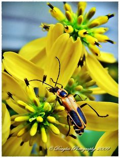 Great #photography ©Doug Pickelheimer from Photocrowd.com